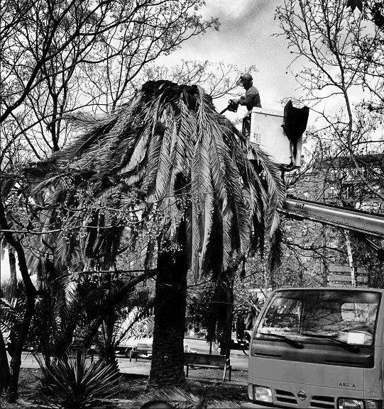 La palmera ha muerto... de Aníbal González (Aventuras al sol VIII)