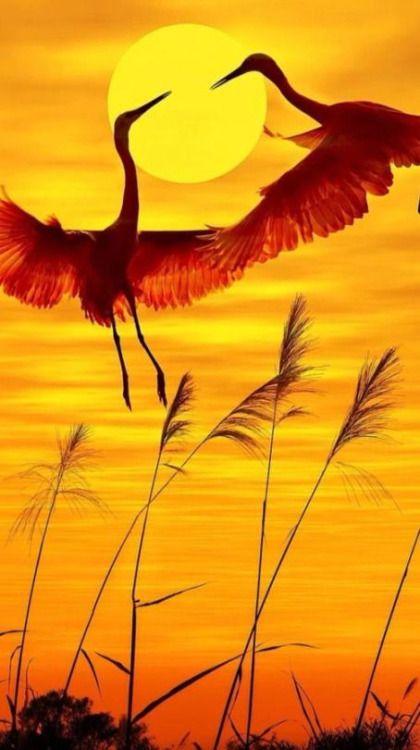cranes or storks: