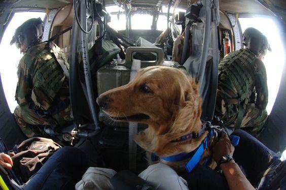 """""""Dogs Of Мужества"""" Книга раскрывает Трудолюбивые Клыки За урагана поиска и спасания (ФОТО)"""