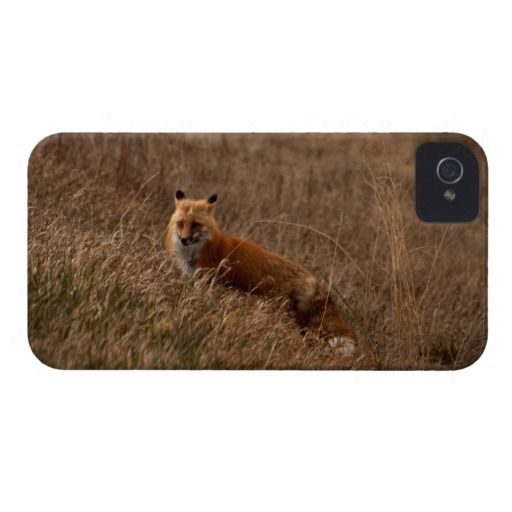 Fox in the Grass photography on a iPhone 4 Cover $48.95