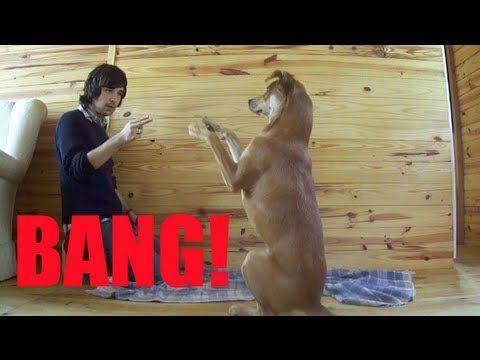 Como ensinar seu cachorro a fingir de morto - Adestramento Positivo - Do...