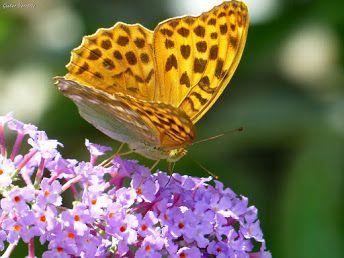 #papillon #fleur #bijoux de #couleur