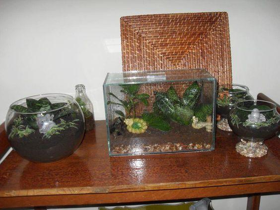 aproveitar os aquários  lá de casa