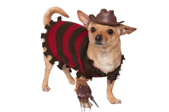Whatever you do, don't fall asleep… until you put this Freddy Krueger Dog Costume on your pup.