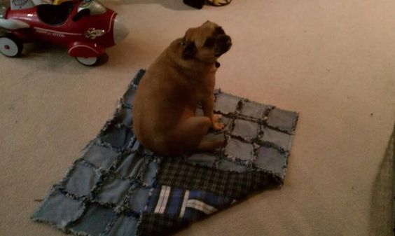 GERTY's dog quilt (rag quilt).