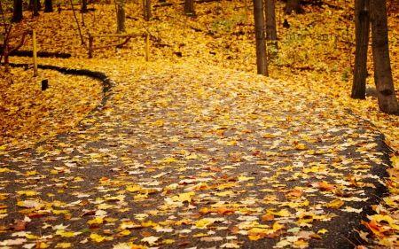 散らばったパスの葉 草 自然 高解像度で壁紙