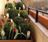 Winterbalkon | Eigen Huis & Tuin gelaagde beplanting (3 niveaus met bakken)