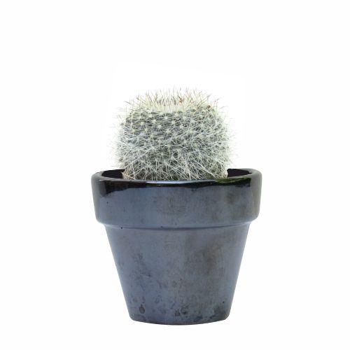 Mammillaria Dealbata, en maceta CLASSIC, realizada en barro, esmaltada en gris acabado brillo, disponible en MyCoolCactus.com; precio orientativo 9€, $11.10