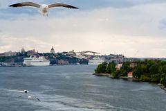 Gaviota en orilla del mar Báltico cerca de Estocolmo Fotografía de archivo libre de regalías