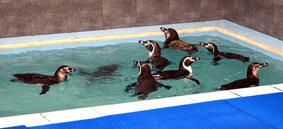 Humboldt Penguins reach the Byculla Xoo in Mumbai | TRAVELMAIL