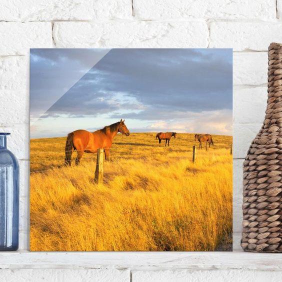 #Glasbild - Feldstraße und #Pferde bei #Abendsonne - #Quadrat 1:1 #Spätsommer #goldener #Herbst #endlesssummer #Farbrausch #Farben #gelb #orange #braun #farbenfroh