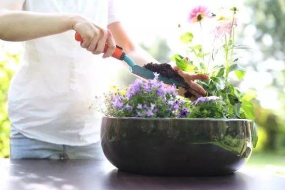 13 Hausmittel als Pflanzendünger & Blumendünger