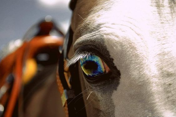 my pretty horsie nanna<3