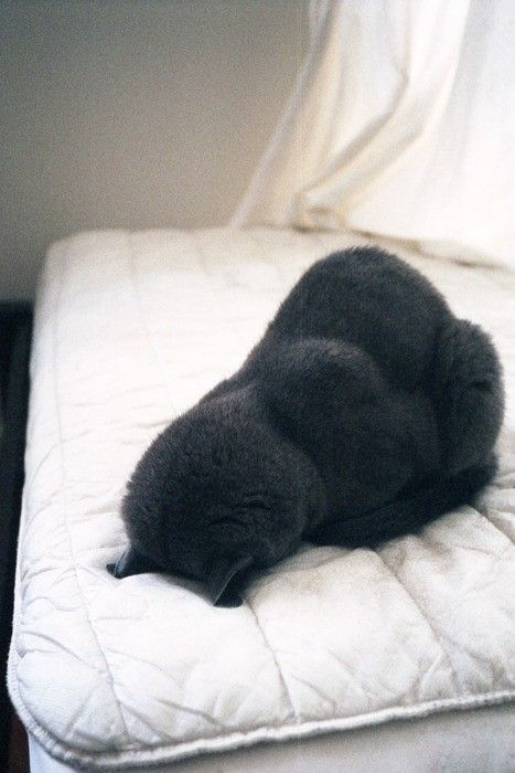Pooped (adorable)