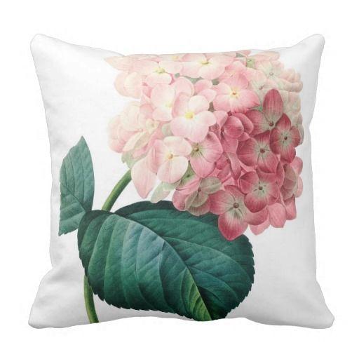 Hydrangea flower illustration Redoute