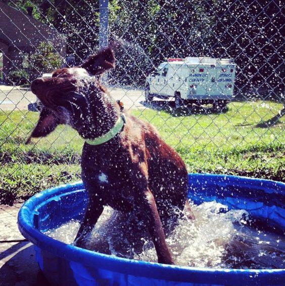 Shakin' it off at Hanover Dog Park - Taylor Park - Ashland, VA - Angus Off-Leash #dogs #puppies #cutedogs #dogparks #ashland #virginia #angusoffleash: