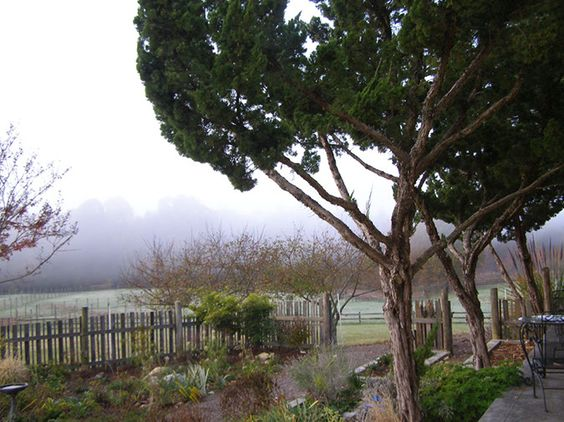 A foggy morning over the pastures
