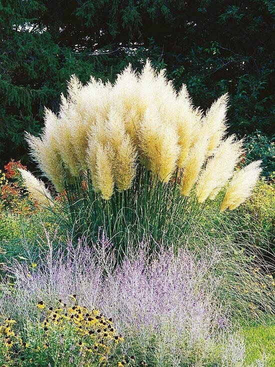The beauty of ornamental grasses for Different ornamental grasses
