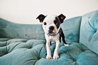 the puppy is so cute....and is that a luxurious dog bed or what? i'd sleep in there! :)