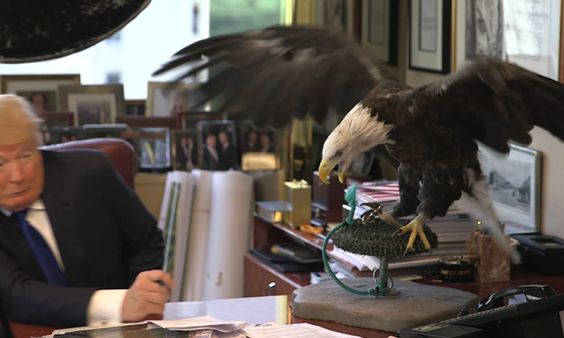 Republican candidate Donald Trump attacked by an American bald eagle during a photoshoot for Time magazine in August