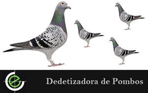 Não aguenta mais estes pombos, contrate  uma Dedetizadora de Pombos.