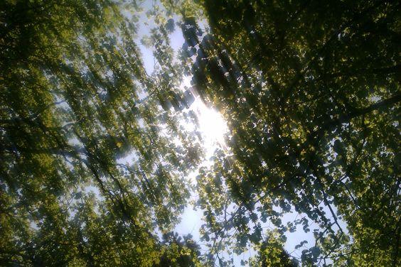 Dappled Light.