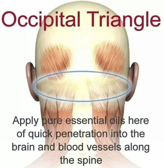 """""""The photo shown is a good application location for MANY protocols, especially when using essential oils for headache, anxiety and ADD/ADHD protocols. The suboccipital triangle is in close proximity to arterial blood flow to the brain and key neurological tissue.""""  I've often tried to tell people in words where I used to apply oils for a migraine (I don't get them anymore) and it was hard to explain. This photo does a great job showing the location. by leannasuzanna"""