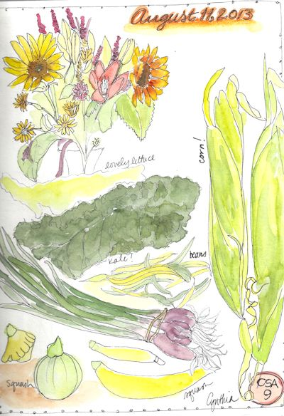 watercolor farm share Boulder Cynthia Morris illustration