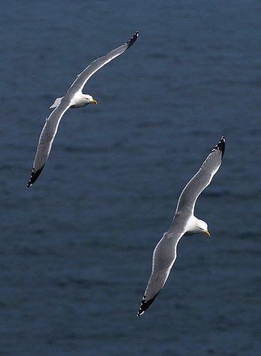 ===Que es para ti volar?...=== - Página 3 Adf2d07017c3b5bf52ed5de7935e95c2