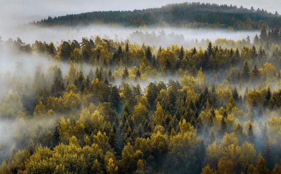 Autumn Morning... Image was taken in Aulanko National Urban Park, Hämeenlinna Finland...