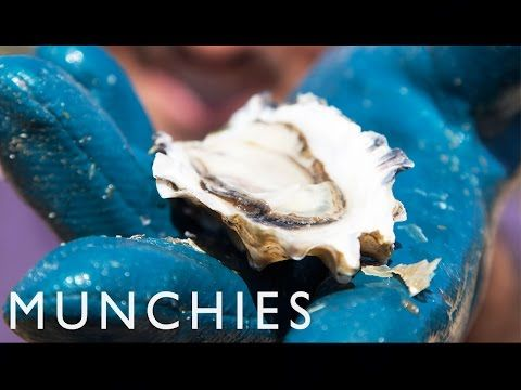 The Right Way to Eat Oysters - Stop Eating it Wrong, Episode 8 - YouTube