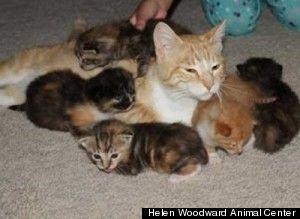 Mother cat takes a bullet for her kittens.