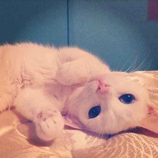 So cute jasper!
