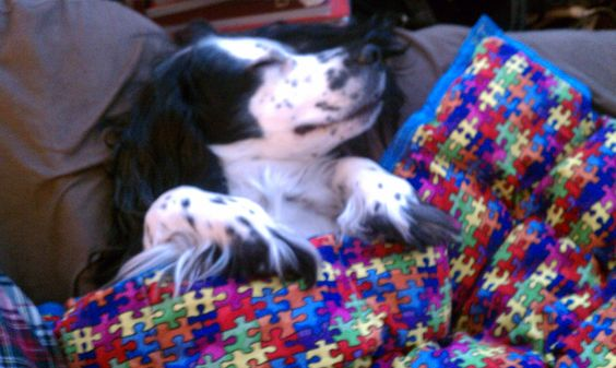 Dixie is happy and calm during a storm under her weighted blanket!  #weightedblanket #calm  Pinned by http://MosaicWeightedBlankets.com