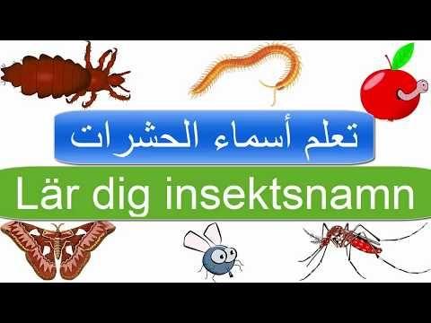 مفردات الحشرات في اللغة السويدية تعلم أسماء الحشرات اسماء الحيوانات في اللغة السويدية Youtube Novelty Sign Signs
