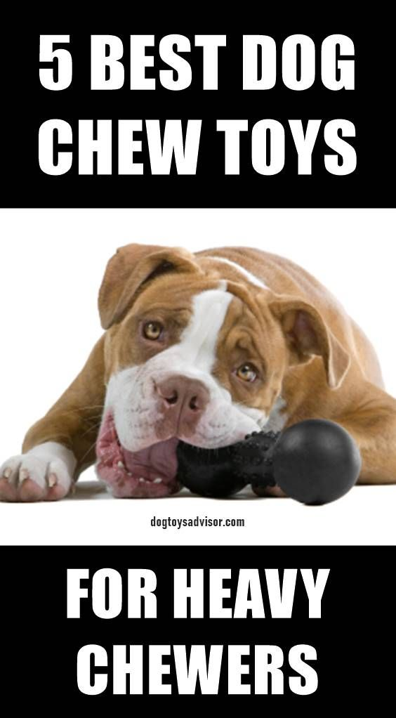 Pin By Chelsea Grim On Pet Fun Aggressive Dog Dog Chew Toys Dogs
