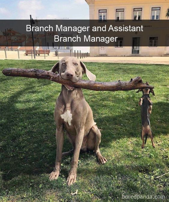 Assistant To The Branch Manager
