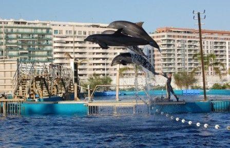 Imagens de golfinhos 13