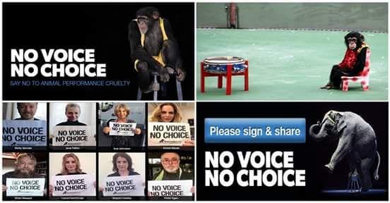 Please Sign & RT: Take the pledge to help end animal performance cruelty!   http://novoice.animalsasia.org/novoicenochoice/ … #DontBuyTheTicket