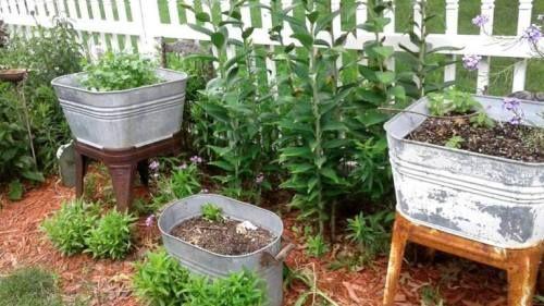 Rhonda Duchesneau Galvanized Tub Garden Garden Yard Ideas