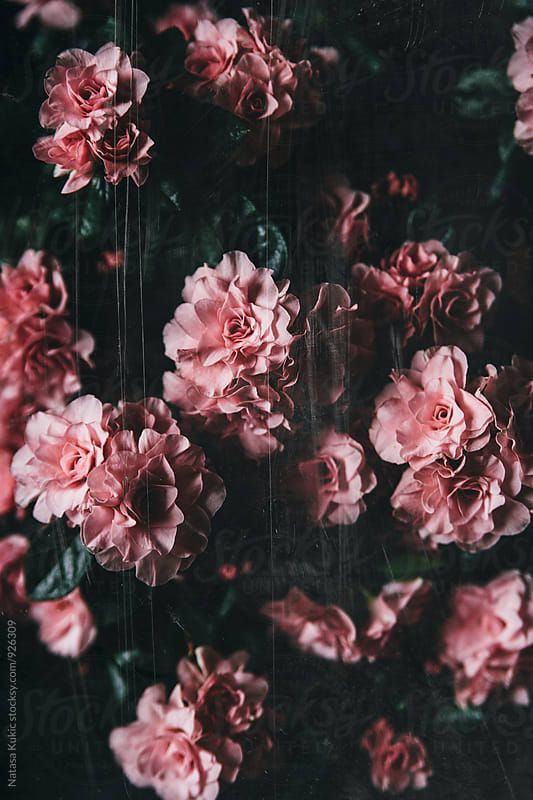 Aesthetic High Resolution Dark Floral Wallpaper