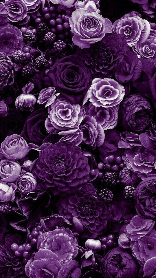 Fantastic No Cost Purple Flowers Fondos Thoughts Purple Flowers Are One Of The The Majority Of In 2021 Purple Flowers Wallpaper Purple Flowers Purple Wallpaper Iphone Fantastic photo flower wallpaper photo