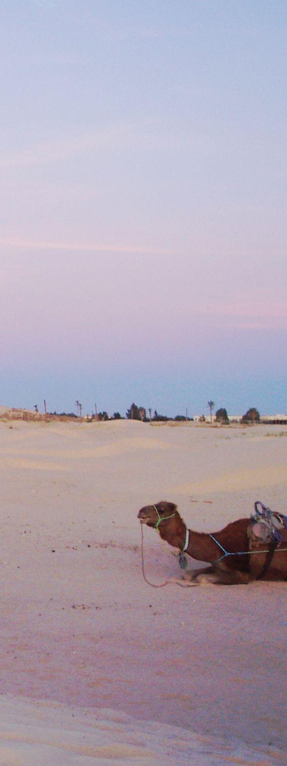 チュニジア ラクダ乗り  Tunisia camel rides