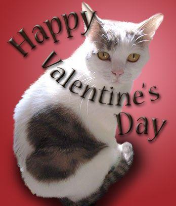 Valentine's Cat: