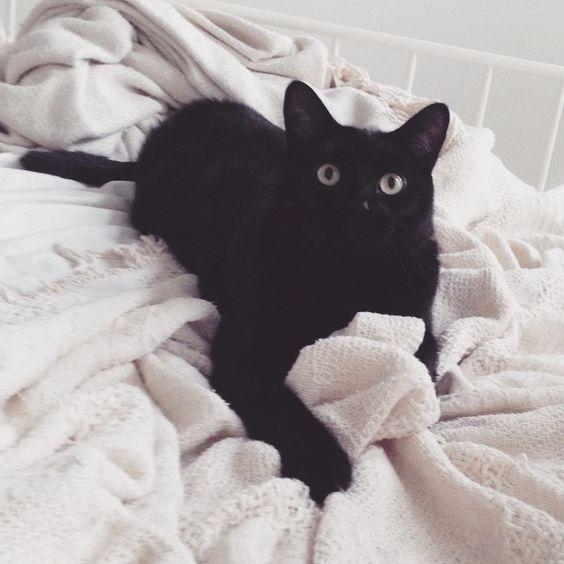 adopting a cat from petsmart
