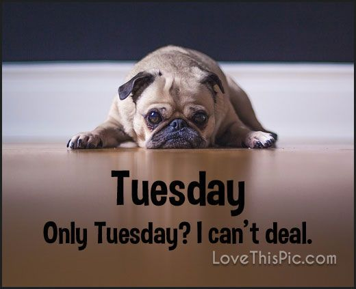 Only Tuesday I Cant Deal!