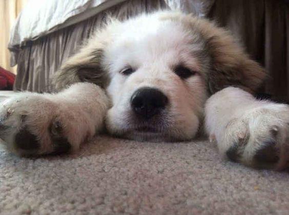Diesen schläfrigen Kerl mit riesigen Pfoten.