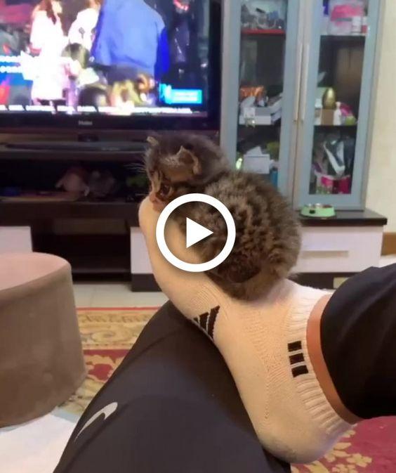 De repente algo dorme na sua meia
