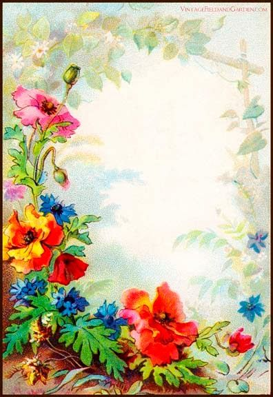 Vintage Field Garden Illustrated Border Flowers in a