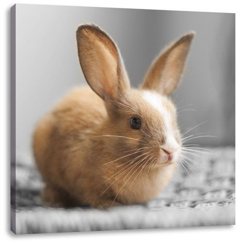 East Urban Home Cuddly Baby Rabbit Photographic Print On Canvas Bunny Art Canvas Prints Rabbit